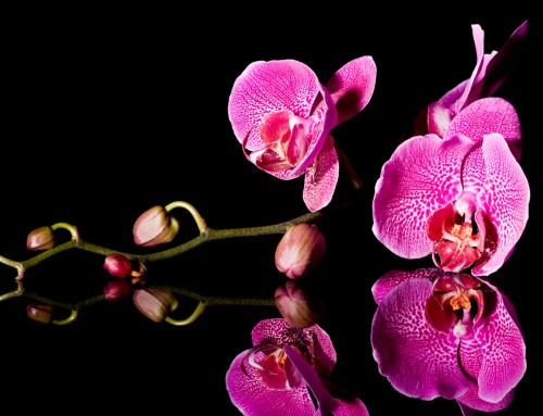 Orchid Image 6