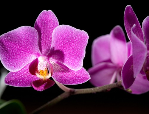 Orchid Image 5
